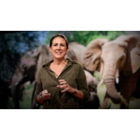 Logo du podcast How bees can keep the peace between elephants and humans | Lucy King