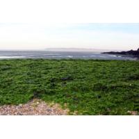 Logo du podcast Le fléau des algues vertes empoisonne toujours la Bretagne