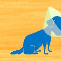 Logo du podcast Cone of Shame