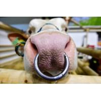 Logo du podcast Bulgarie : une vache condamnée à mort pour avoir franchi la frontière serbe