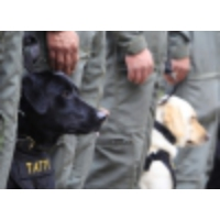 Logo du podcast Does your pooch have what it takes to be a bomb-sniffing dog?