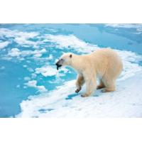 Logo du podcast Reporterre sur France Inter: les conséquences des températures record en Arctique