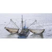Logo of the podcast Vers une interdiction totale de la pêche électrique en Europe