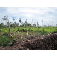 Logo du podcast Reporterre sur Radio Suisse: Total et l'huile de palme stimulent la déforestation