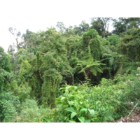 Logo of the podcast Reporterre sur France Inter: la forêt amazonienne au bord du point de bascule
