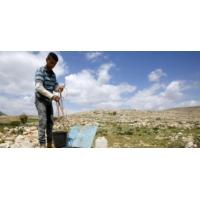Logo of the podcast Comment se porte l'économie de la Palestine aujourd'hui?