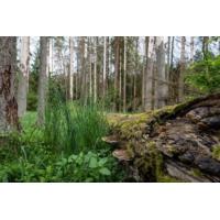 Logo du podcast La Pologne accusée par l'Europe de dévaster la forêt de Bialowieza