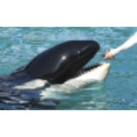 Logo du podcast What can killer whales teach us about menopause?