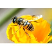 Logo du podcast Les insectes pourraient disparaître de la planète d'ici 100 ans