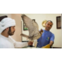 Logo du podcast There's a hospital in the United Arab Emirates that serves only falcons