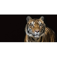 Logo of the podcast Des animaux sauvages en vente sur Internet