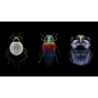 Logo of the podcast Mind-blowing, magnified portraits of insects | Levon Biss