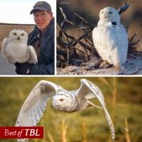 Logo du podcast Best of This Birding Life: Snowy Owl Invasion with Scott Weidensaul