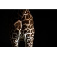 Logo du podcast Les actualités de 18h - Biodiversité : l'ONU annonce la disparition prochaine d'1 million d'espèces