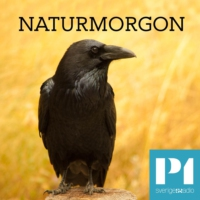 Logo of the podcast Naturmorgon