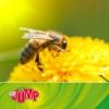 Logo of the podcast MDR JUMP Umschau Quicktipp