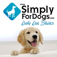 Logo of the podcast SFD 20: Explaining a Dog's Death to Your Child