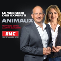Logo du podcast RMC : 02/04 - Vos Animaux : Attention les tiques attaquent ! - 7h-8h