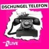 Logo of the podcast 1LIVE Das Dschungeltelefon
