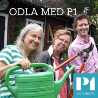 Logo of the podcast Odla med P1