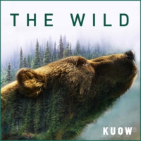 Logo of the podcast The Wild
