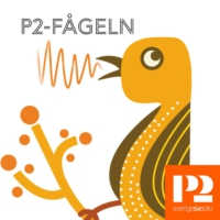 Logo of the podcast P2-fågeln