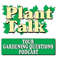 Logo du podcast Planting a bee friendly garden.