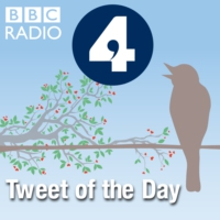 Logo of the podcast BBC Radio 4 - Tweet of the Day