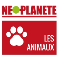 Logo of the podcast Néoplanète - Les animaux