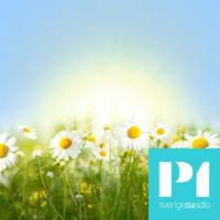 Logo de la radio Sommar & Vinter i P1