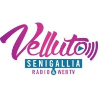 Logo de la radio Radio Velluto