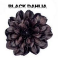 Logo of radio station BlackDahlia