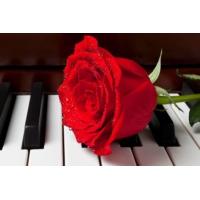 Logo of radio station Radio Art - Solo Piano