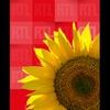 Logo of show Une minute qui peut tout changer
