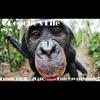 Logo of show A bonobo's life