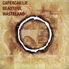Couverture de l'album Beautiful Wasteland