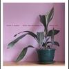 Couverture de l'album Lucky Dog Recordings 03-04