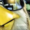 Couverture du titre Shut Up Chicken (2020)