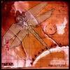 Couverture de l'album Dragonfly