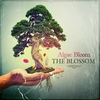 Couverture de l'album The Blossom