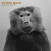 Cover of the album Baboon Moon
