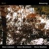 Couverture de l'album Amazing (feat. Dave Liebman, Adam Nussbaum & Steve Swallow)
