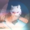 Couverture de l'album Lovelorn