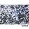 Cover of the album Silent Light
