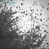Couverture du titre Wonder (Instrumental Mix) [feat. TWH]