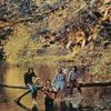 Cover of the album Wild Life