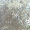 Cover of the album Vivid