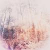 Cover of the album Arboretum