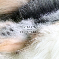 Cover of the track Bleu merle - EP