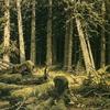 Couverture du titre Waldschrat